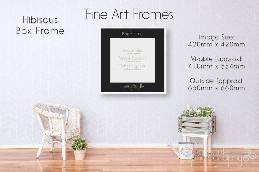 A2 Square Hibiscus Box Frame